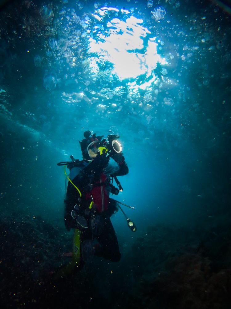 田子 ダイビング 地形 洞窟