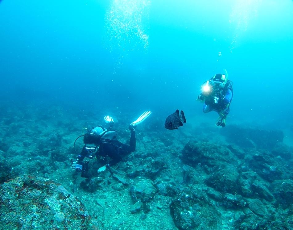 江の浦 ダイビング 水中写真撮影